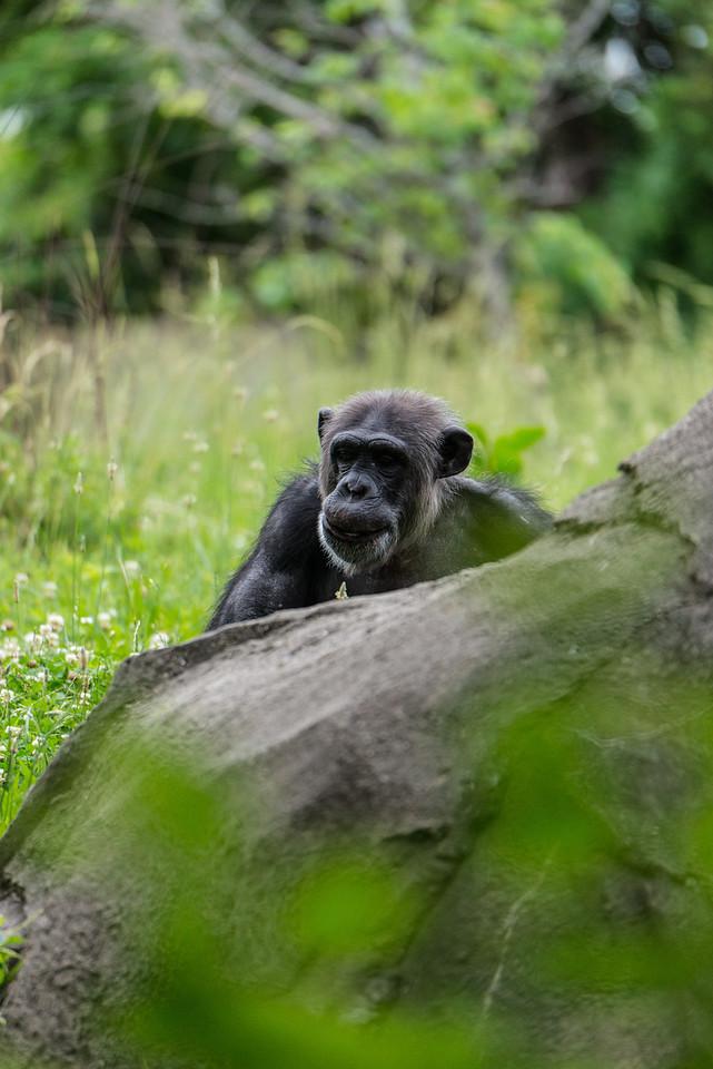 Det Zoo 2014-20