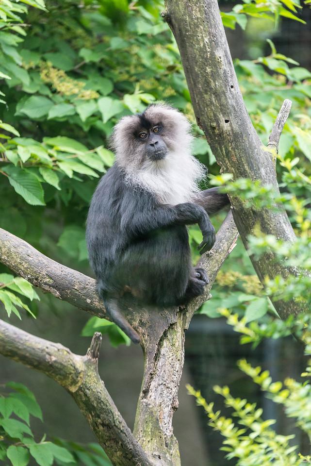 Det Zoo 2014-18