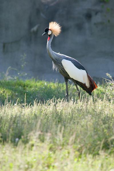Detroit Zoo Sept 2008 -25