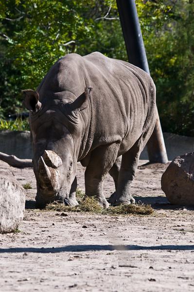 Detroit Zoo Sept 2008 -35