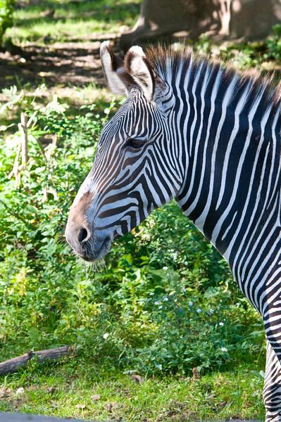 Detroit Zoo Sept 2008 -29