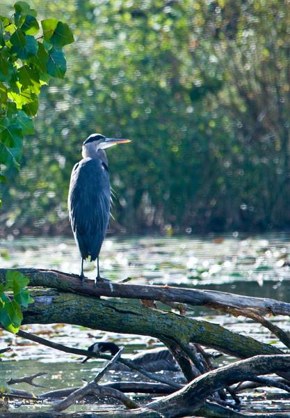 Detroit Zoo Sept 2008 -11