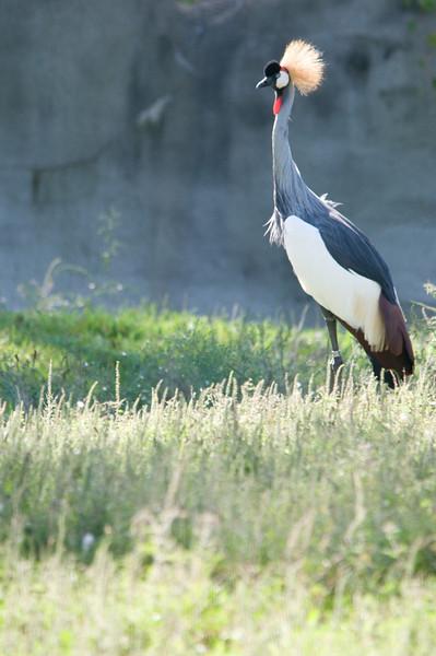Detroit Zoo Sept 2008 -24