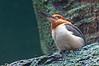 Bronx Zoo: Kingfisher, 5/28/2010