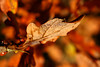Nature - Autumn Image Stock Photography - Royalty Free Canvas, Download, Print