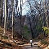Further on the trail ...bare trees.