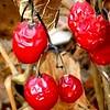 Berries still hanging on.