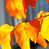 November First was a crisp, cold morning but the sun dazzled. These caught my eye.