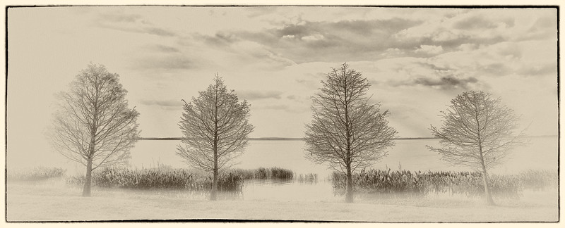 Four Trees in Sepia