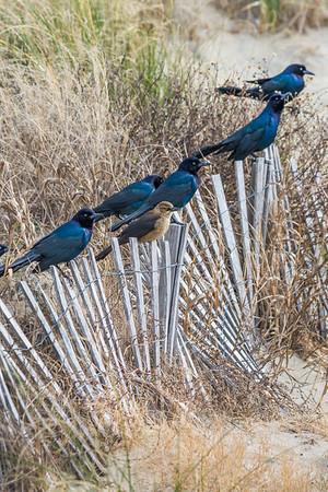 Birds 526