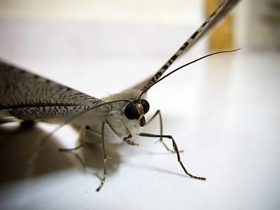 |The Moth Has No Prophecy|