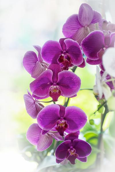 """ETC-3151  """"Purple Orchids"""""""