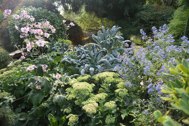 Sue's Garden