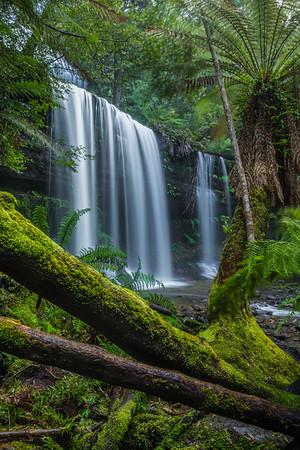 Russell Falls Gondwana