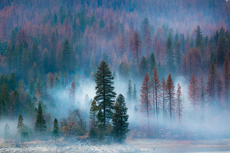 Sierra National Forest, California