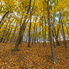 Autumn Forest 10/24/18