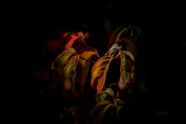 Intimate Autumn 1