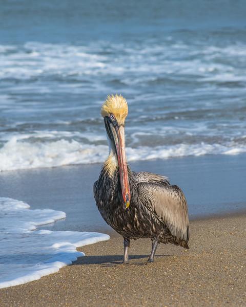 Pelican 9749