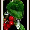 Ice Berries Macro