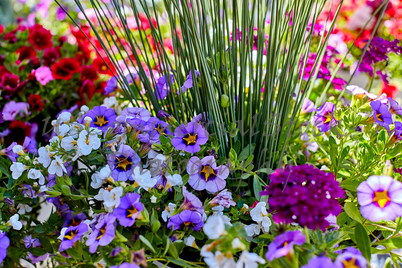 Landscaping Floral Arrangment with Assorted Flowers