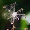 Spiderweb Pinwheel