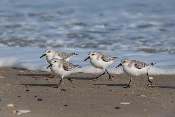 Birds 8797