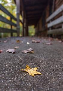 An Autumn Leaf 10/26/17