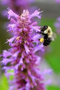 XT1S2343 2016-07-31 bees 122_FUJI (2)