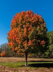 Autumn Colors 10/31/17