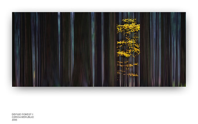 Dense Forest 0.1