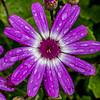Raindrops on Flowers 4/29/18