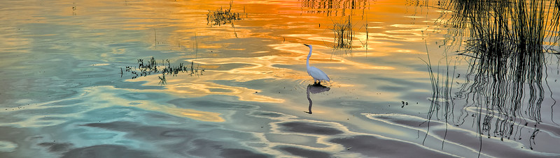 """ETC-3006  """"Egret in Sunlit Waters"""""""