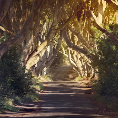 Joshua D Weiss Fine Art Photography of the Dark Hedges from Bregagh Rd. in Northern Ireland