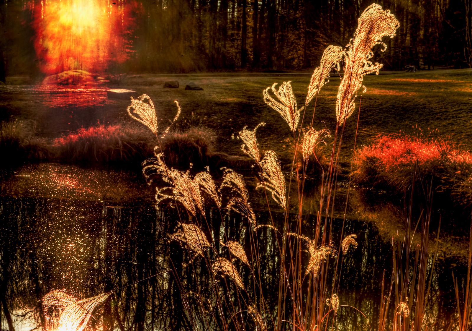 Blazing reeds