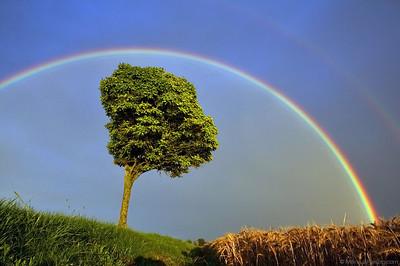 Rainbow @ Langres France 23Jul11