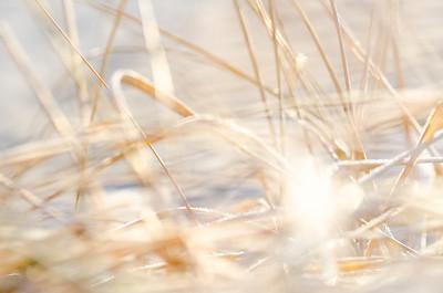 frosty tangle