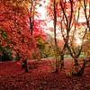 Autumn at Bodnant 1