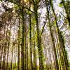 Sunlight Through Tree Tops