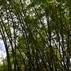 The Bamboo that bends is stronger than the Oak that resists. I Japanese Proverb