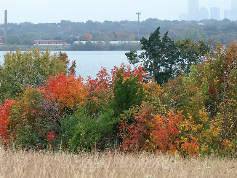 Autumn Color at White Rock lake