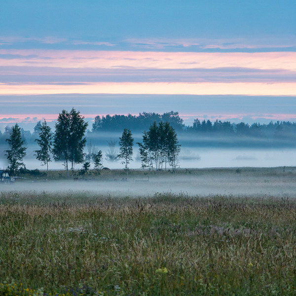 Nature landscape in sunrise hour with trees and meadow in Midsummer in Latvia