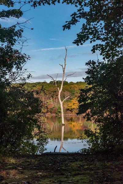 Autumn Colors Through Trees at Manasquan Reservoir 10/23/17