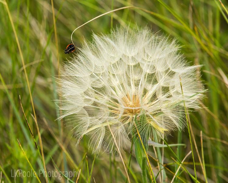 Little Bug Big Puff