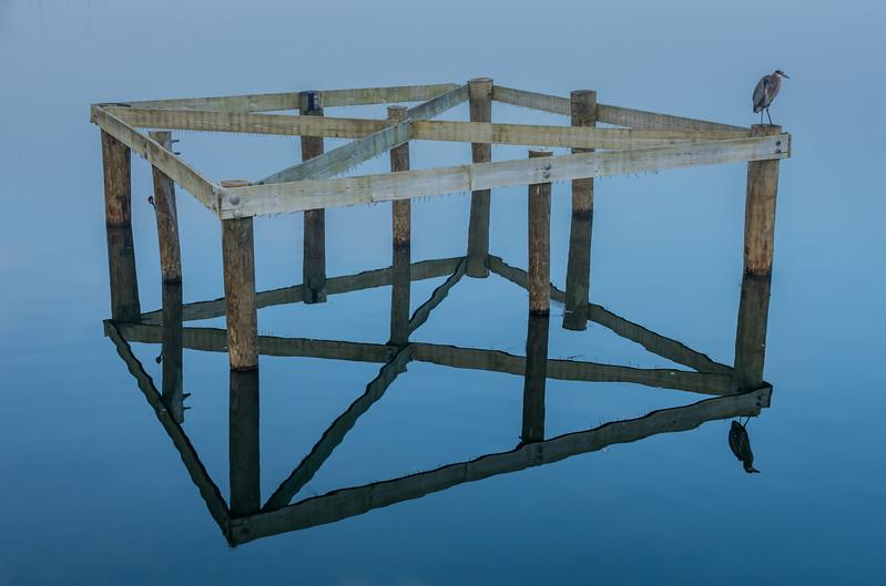 Foggy Morning at Manasquan Reservoir Platform with Great Blue Heron 11/2/17