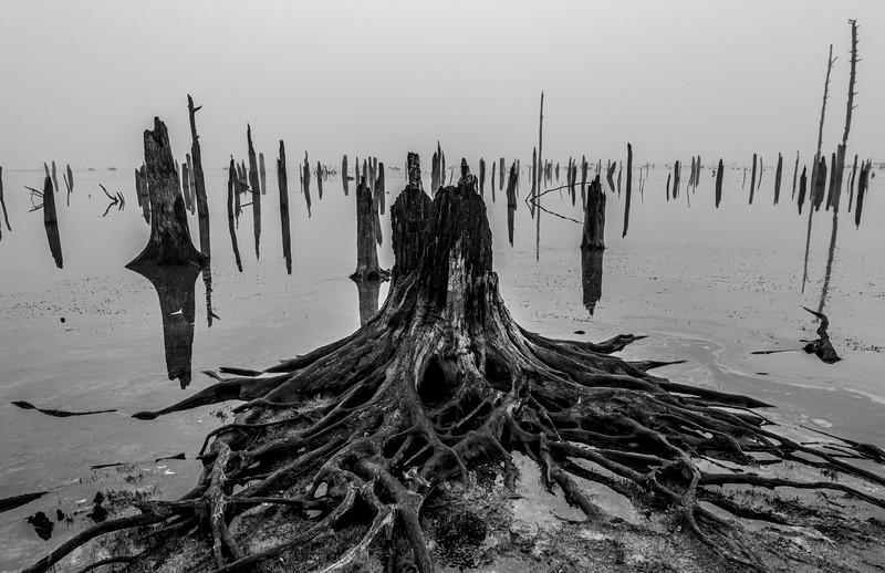 Foggy Morning At Manasquan Reservoir 10/22/20