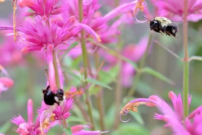 XT1S2419 2016-07-31 bees 122_FUJI (3)