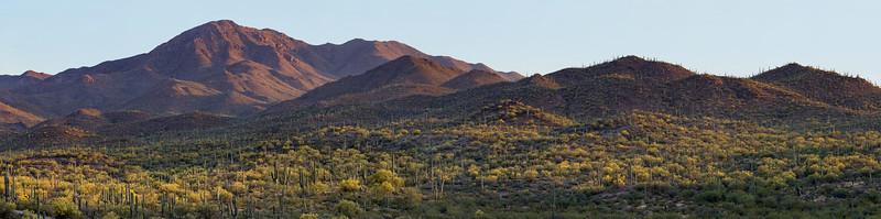 Saguaro Landscape 2015