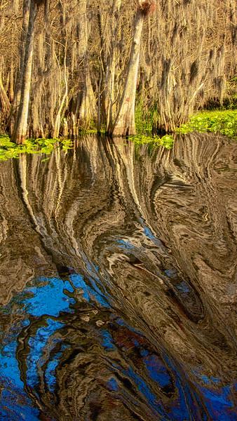 ETC2029     Trees in Water