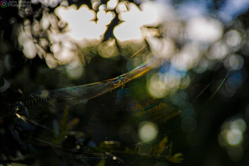 Rainbow Spider Web