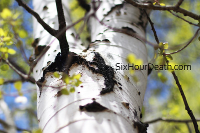 Six Month Death